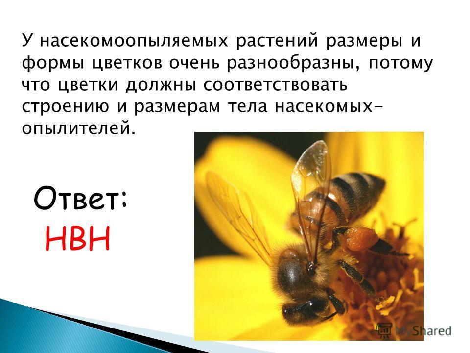 У насекомоопыляемых растений размеры и формы цветков очень разнообразны, потому что цветки должны соответствовать строению и размерам тела насекомых- опылителей. Ответ: НВН