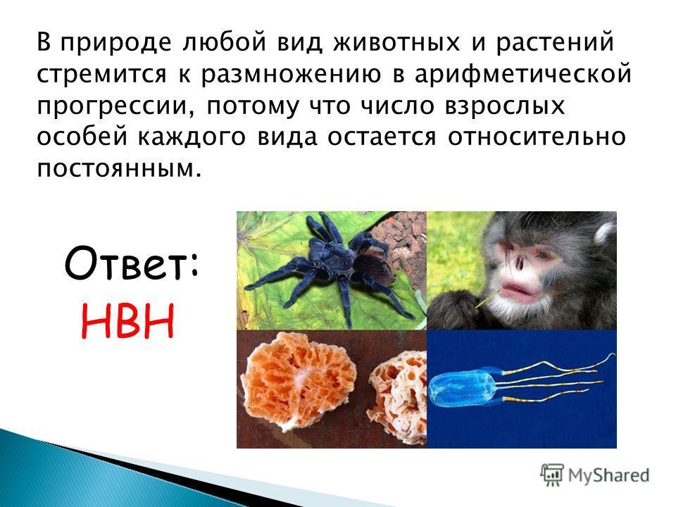В природе любой вид животных и растений стремится к размножению в арифметической прогрессии, потому что число взрослых особей каждого вида остается относительно постоянным. Ответ: НВН