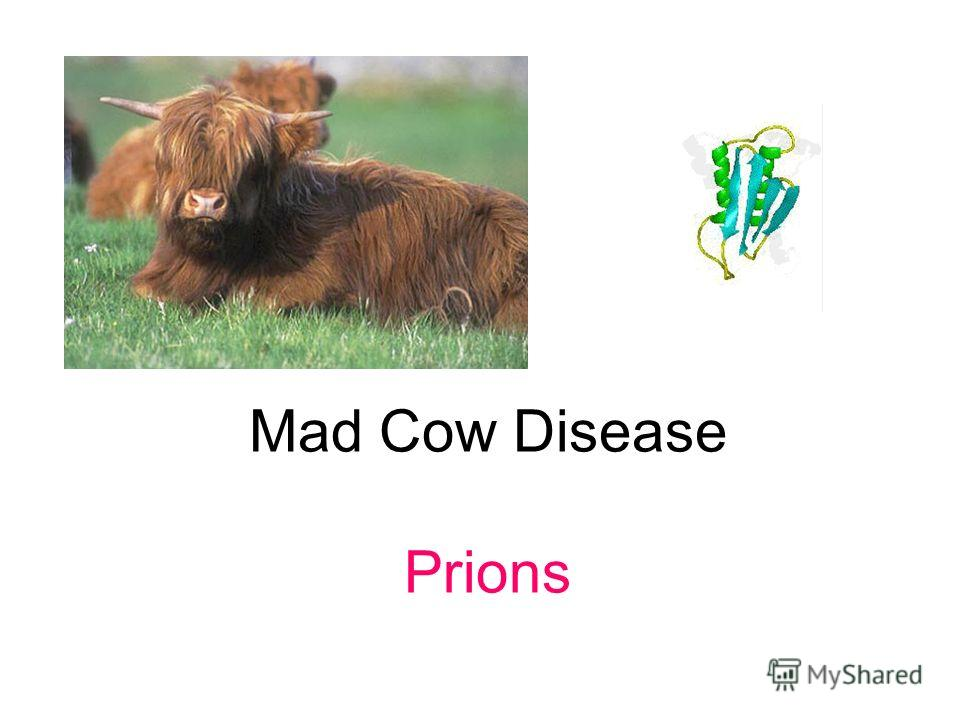 Mad Cow Disease Prions