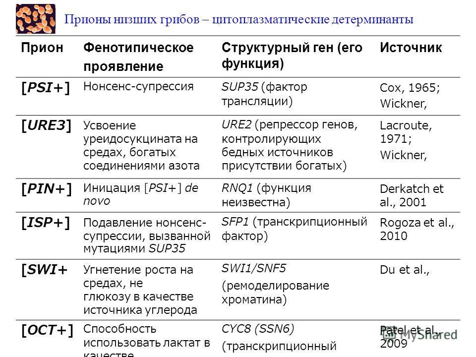 Прионы низших грибов – цитоплазматические детерминанты ПрионФенотипическое проявление Структурный ген (его функция) Источник [PSI+] Нонсенс-супрессияSUP35 (фактор терминации трансляции) Cox, 1965; Wickner, 1994 [URE3] Усвоение уреидосукцината на сред
