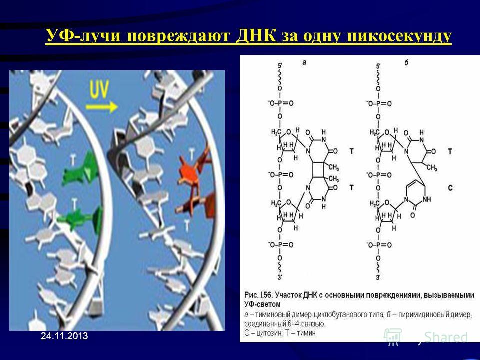 24.11.2013 УФ-лучи повреждают ДНК за одну пикосекунду