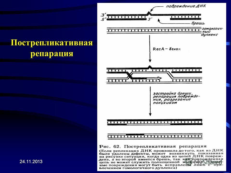 24.11.2013 Пострепликативная репарация