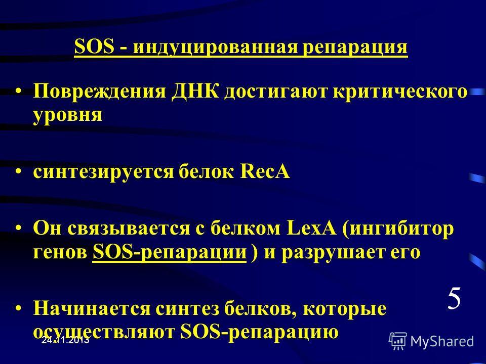 24.11.2013 SOS - индуцированная репарация Повреждения ДНК достигают критического уровня синтезируется белок RecA Он связывается с белком LexA (ингибитор генов SOS-репарации ) и разрушает его Начинается синтез белков, которые осуществляют SOS-репараци