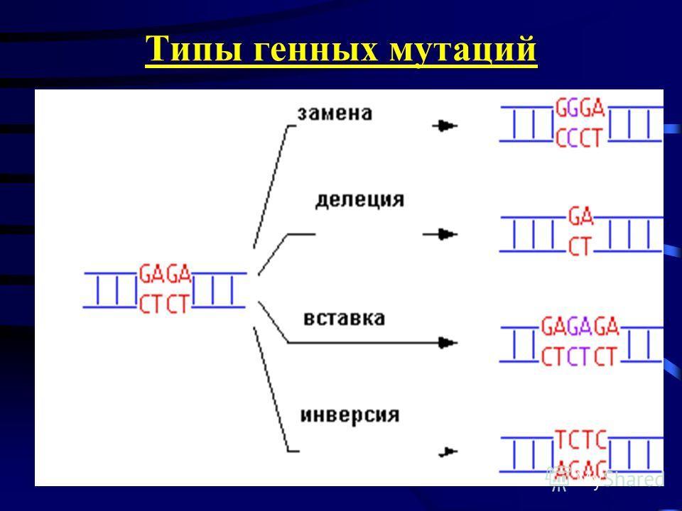 24.11.2013 Типы генных мутаций