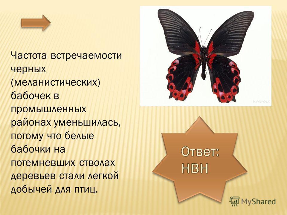 Частота встречаемости черных (меланистических) бабочек в промышленных районах уменьшилась, потому что белые бабочки на потемневших стволах деревьев стали легкой добычей для птиц.