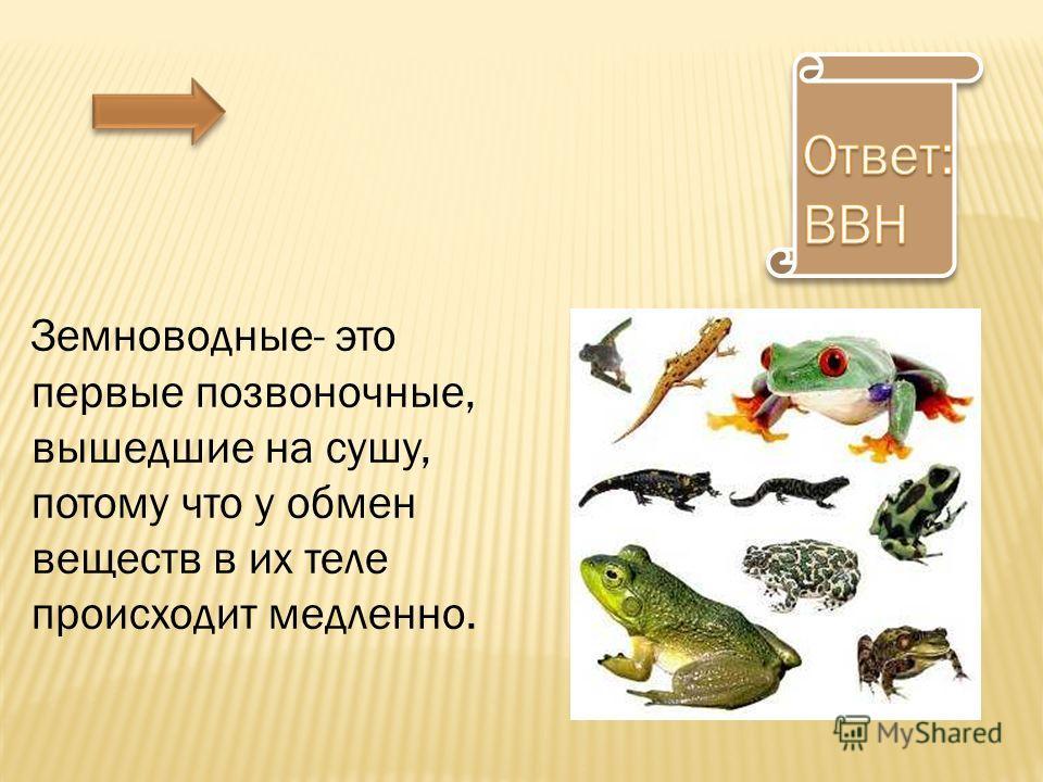 Земноводные- это первые позвоночные, вышедшие на сушу, потому что у обмен веществ в их теле происходит медленно.