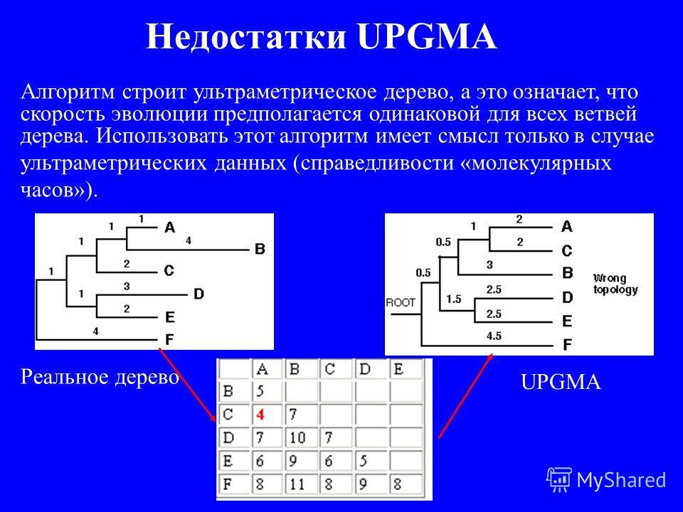 Недостатки UPGMA Алгоритм строит ультраметрическое дерево, а это означает, что скорость эволюции предполагается одинаковой для всех ветвей дерева. Использовать этот алгоритм имеет смысл только в случае ультраметрических данных (справедливости «молеку