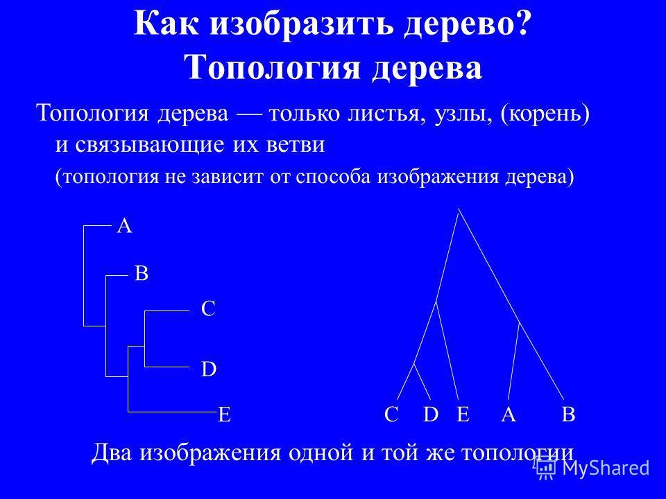 Как изобразить дерево? Топология дерева Топология дерева только листья, узлы, (корень) и связывающие их ветви (топология не зависит от способа изображения дерева) A B C D E ABCDE Два изображения одной и той же топологии
