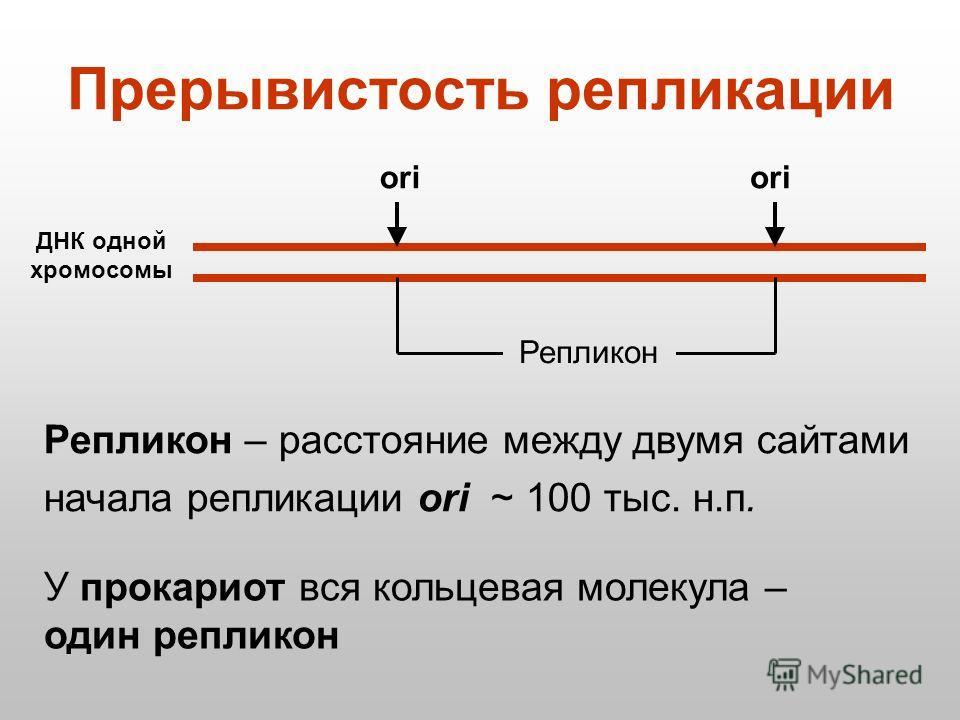Репликон – расстояние между двумя сайтами начала репликации ori ~ 100 тыс. н.п. У прокариот вся кольцевая молекула – один репликон Прерывистость репликации ДНК одной хромосомы ori Репликон