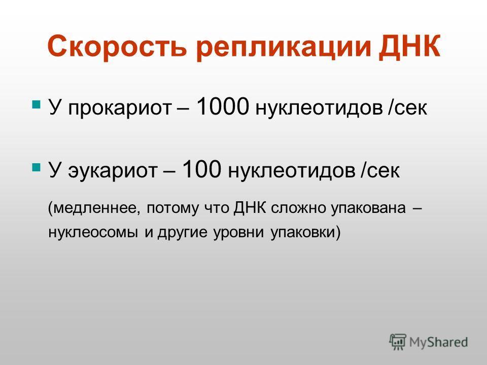 Скорость репликации ДНК У прокариот – 1000 нуклеотидов /сек У эукариот – 100 нуклеотидов /сек (медленнее, потому что ДНК сложно упакована – нуклеосомы и другие уровни упаковки)