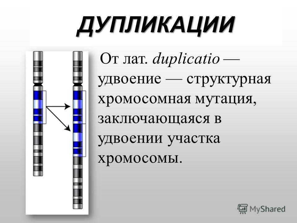 ДУПЛИКАЦИИ От лат. duplicatio удвоение структурная хромосомная мутация, заключающаяся в удвоении участка хромосомы.