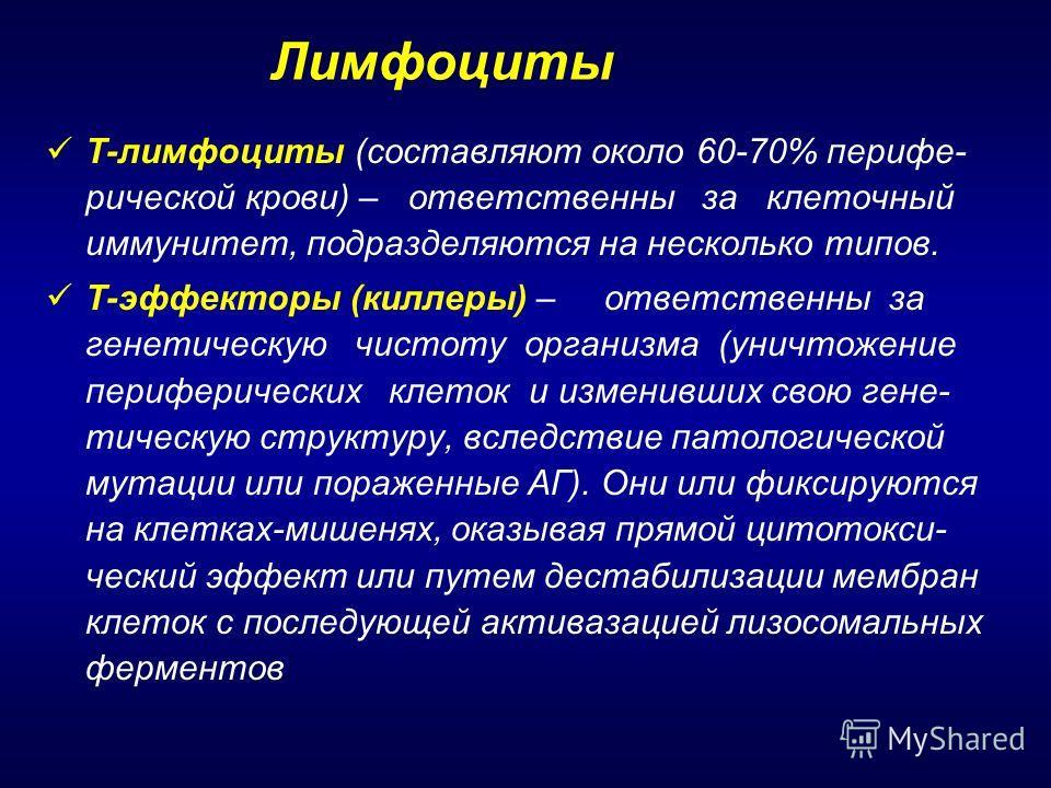 Т-лимфоциты (составляют около 60-70% перифе- рической крови) – ответственны за клеточный иммунитет, подразделяются на несколько типов. Т-эффекторы (киллеры) – ответственны за генетическую чистоту организма (уничтожение периферических клеток и изменив