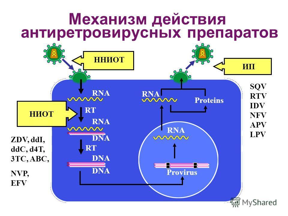 RT Provirus Proteins RNA RT НИОТ RNA DNA Механизм действия антиретровирусных препаратов ZDV, ddI, ddC, d4T, 3TC, ABC, NVP, EFV ИП SQV RTV IDV NFV APV LPV ННИОТ