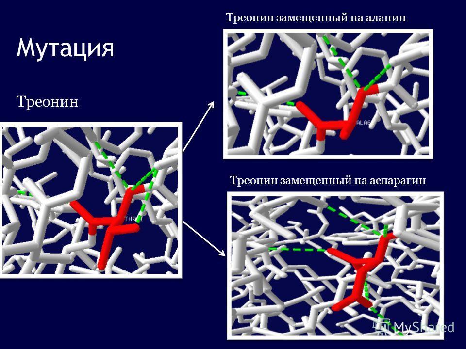Треонин Треонин замещенный на аланин Мутация Треонин замещенный на аспарагин