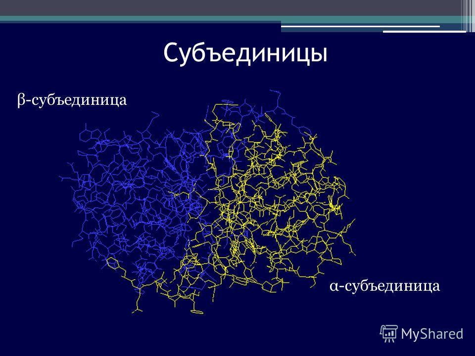 Субъединицы β-субъединица α-субъединица
