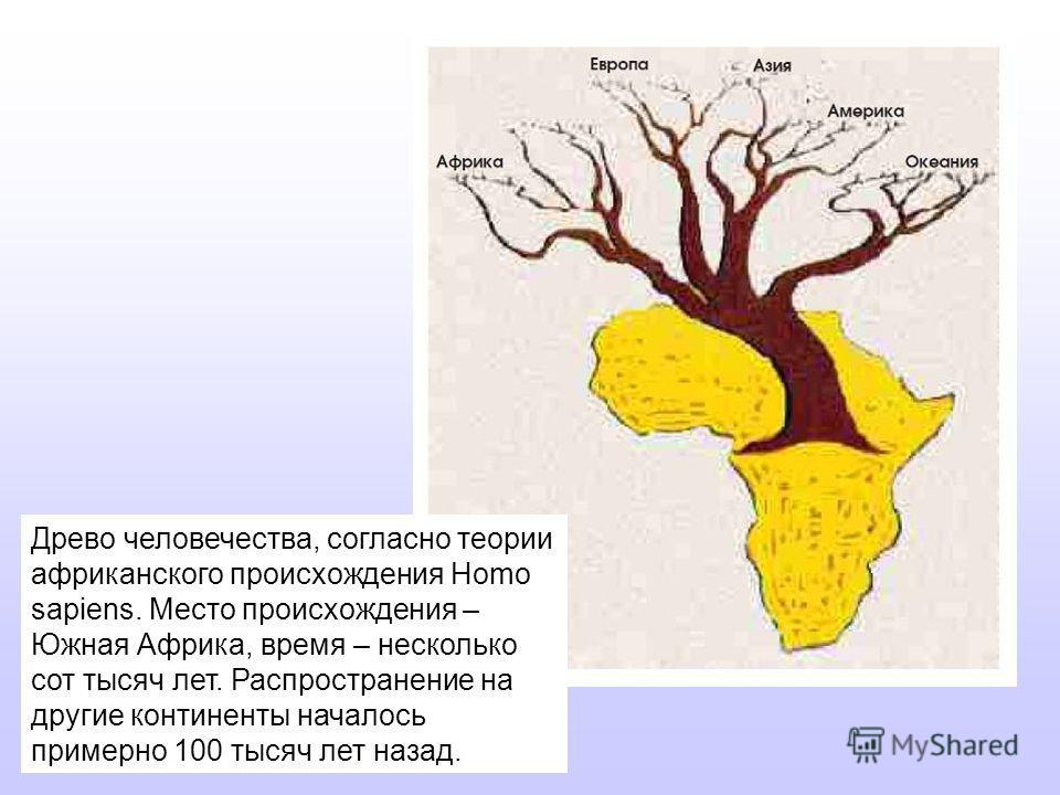 Древо человечества, согласно теории африканского происхождения Homo sapiens. Место происхождения – Южная Африка, время – несколько сот тысяч лет. Распространение на другие континенты началось примерно 100 тысяч лет назад.