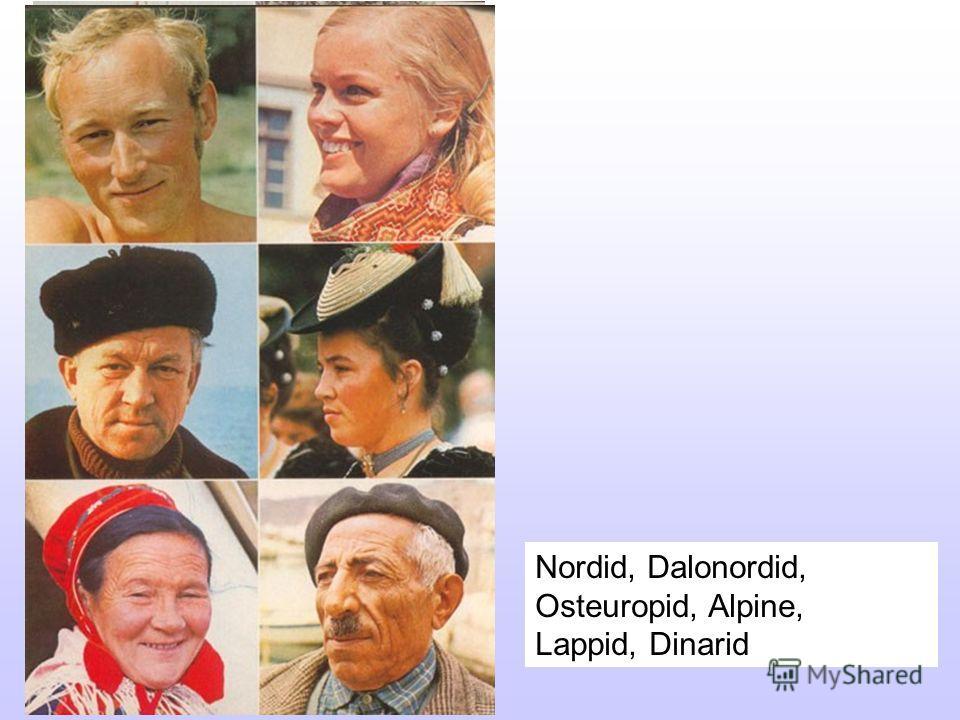 Nordid, Dalonordid, Osteuropid, Alpine, Lappid, Dinarid