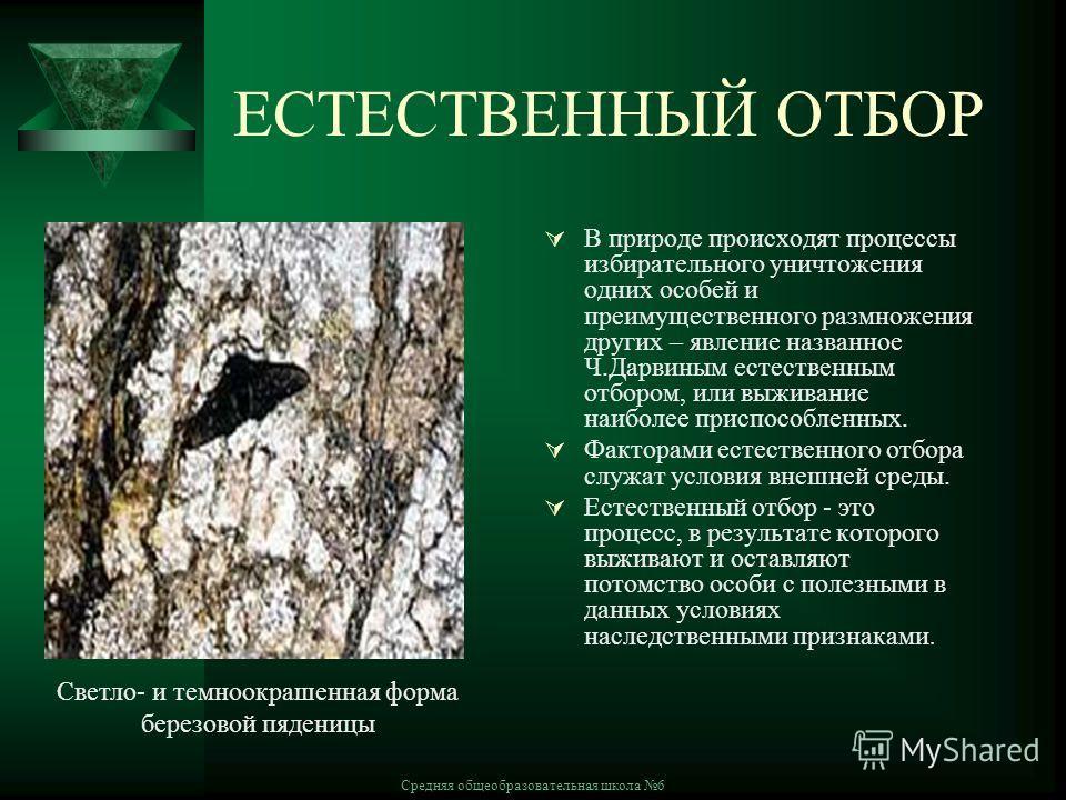 Средняя общеобразовательная школа 6 ЕСТЕСТВЕННЫЙ ОТБОР В природе происходят процессы избирательного уничтожения одних особей и преимущественного размножения других – явление названное Ч.Дарвиным естественным отбором, или выживание наиболее приспособл