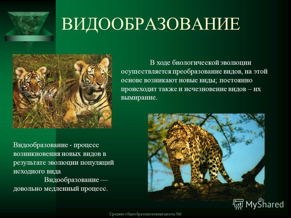 Средняя общеобразовательная школа 6 ВИДООБРАЗОВАНИЕ В ходе биологической эволюции осуществляется преобразование видов, на этой основе возникают новые виды; постоянно происходит также и исчезновение видов – их вымирание. Видообразование - процесс возн