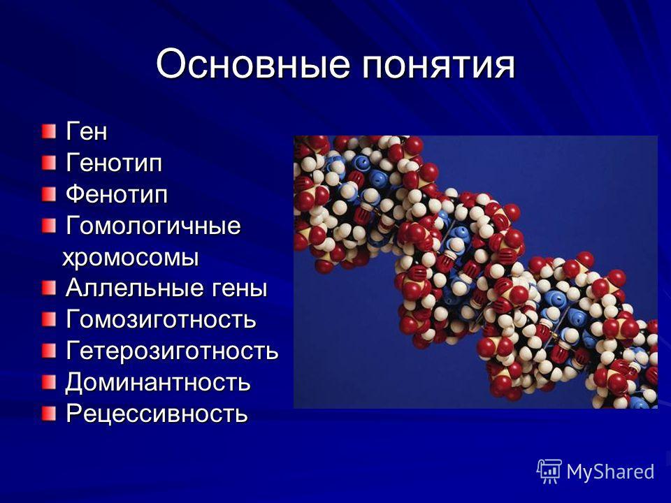 Основные понятия ГенГенотипФенотипГомологичные хромосомы хромосомы Аллельные гены ГомозиготностьГетерозиготностьДоминантностьРецессивность