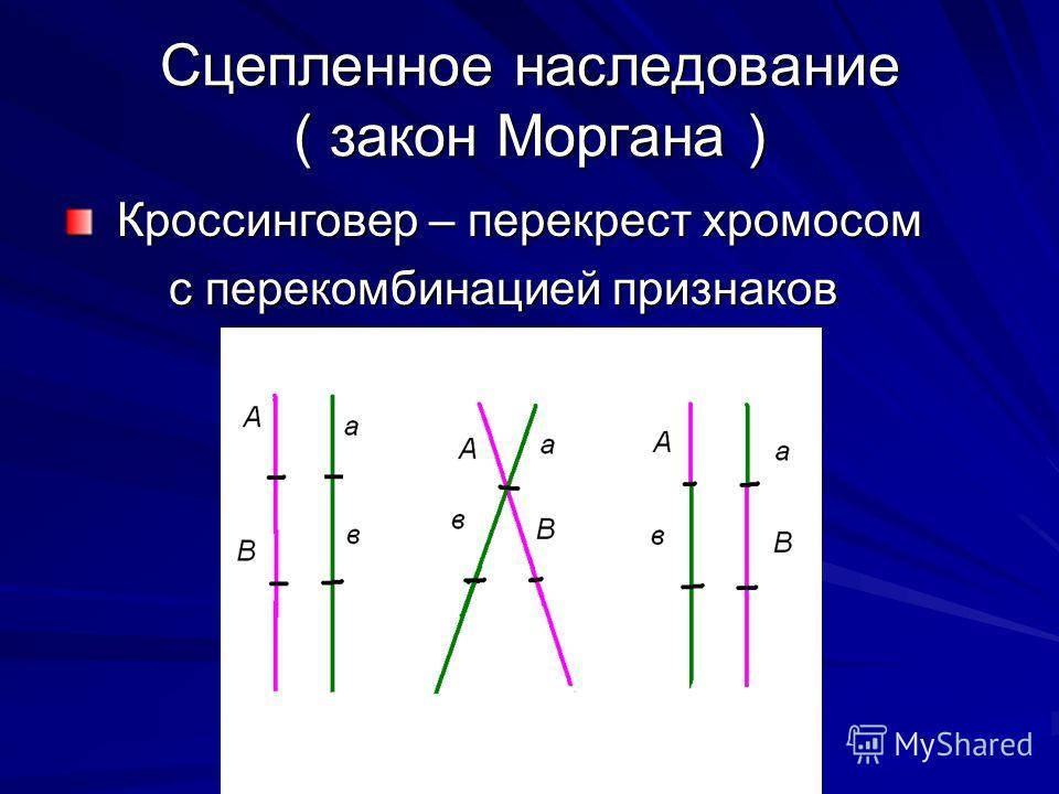 Сцепленное наследование ( закон Моргана ) Кроссинговер – перекрест хромосом Кроссинговер – перекрест хромосом с перекомбинацией признаков с перекомбинацией признаков