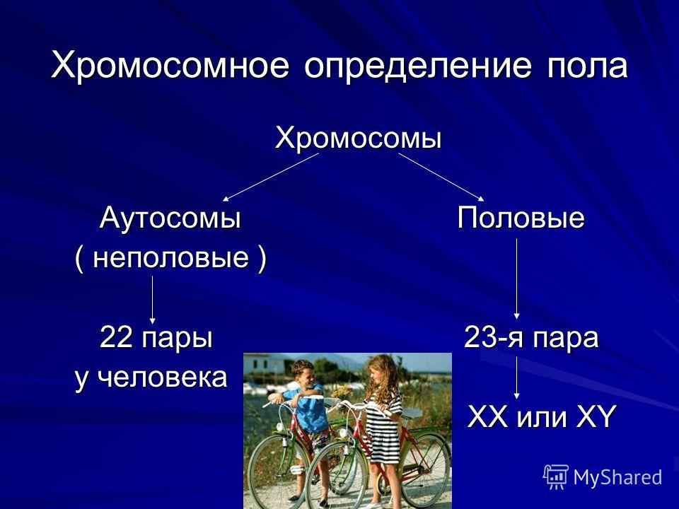 Хромосомное определение пола Хромосомы Хромосомы Аутосомы Половые Аутосомы Половые ( неполовые ) ( неполовые ) 22 пары 23-я пара 22 пары 23-я пара у человека у человека ХХ или ХY ХХ или ХY