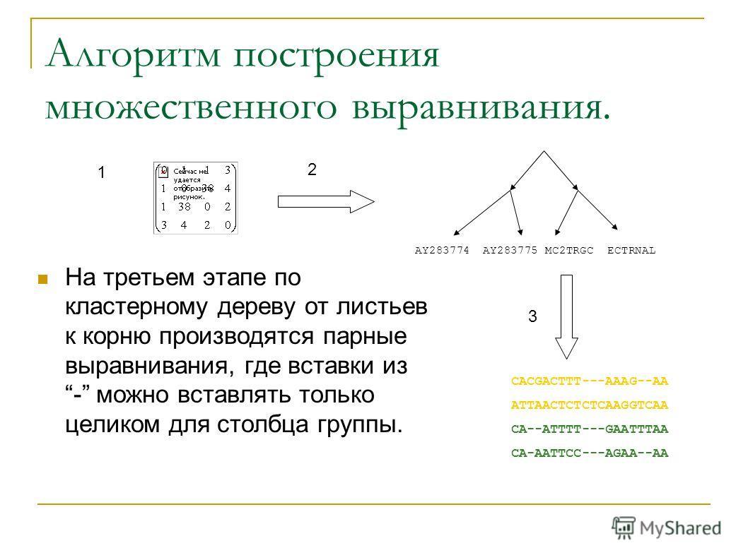Алгоритм построения множественного выравнивания. На третьем этапе по кластерному дереву от листьев к корню производятся парные выравнивания, где вставки из - можно вставлять только целиком для столбца группы. CACGACTTT---AAAG--AA ATTAACTCTCTCAAGGTCAA
