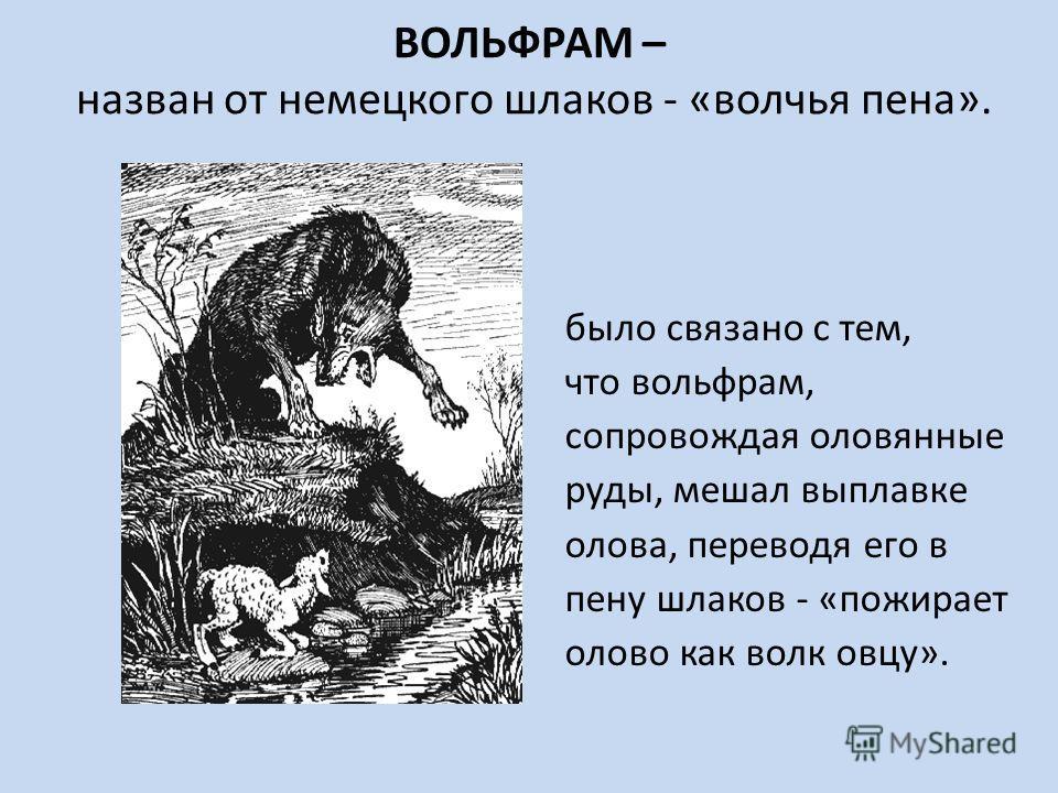 ВОЛЬФРАМ – назван от немецкого шлаков - «волчья пена». было связано с тем, что вольфрам, сопровождая оловянные руды, мешал выплавке олова, переводя его в пену шлаков - «пожирает олово как волк овцу».