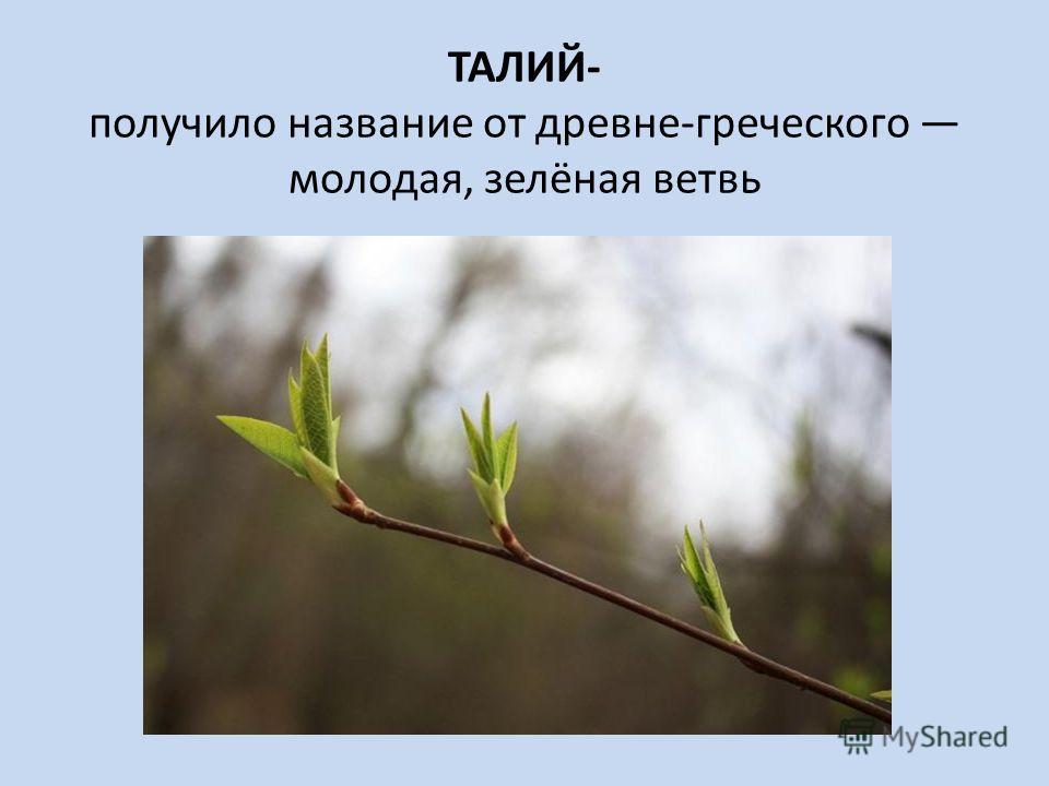ТАЛИЙ- получило название от древне-греческого молодая, зелёная ветвь