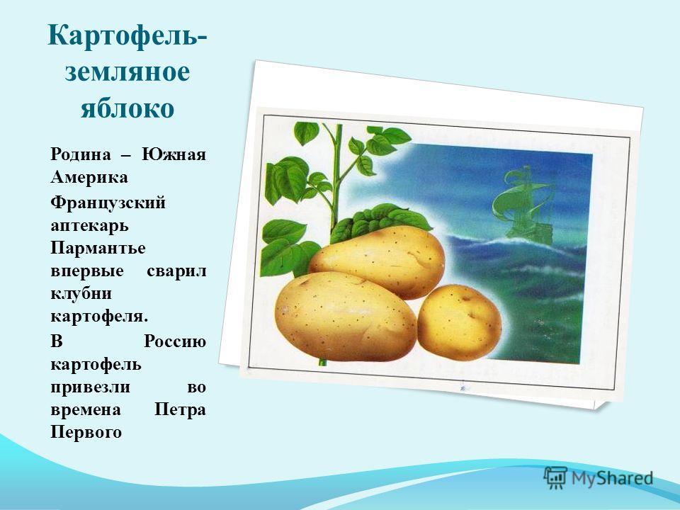 Картофель- земляное яблоко Родина – Южная Америка Французский аптекарь Пармантье впервые сварил клубни картофеля. В Россию картофель привезли во времена Петра Первого