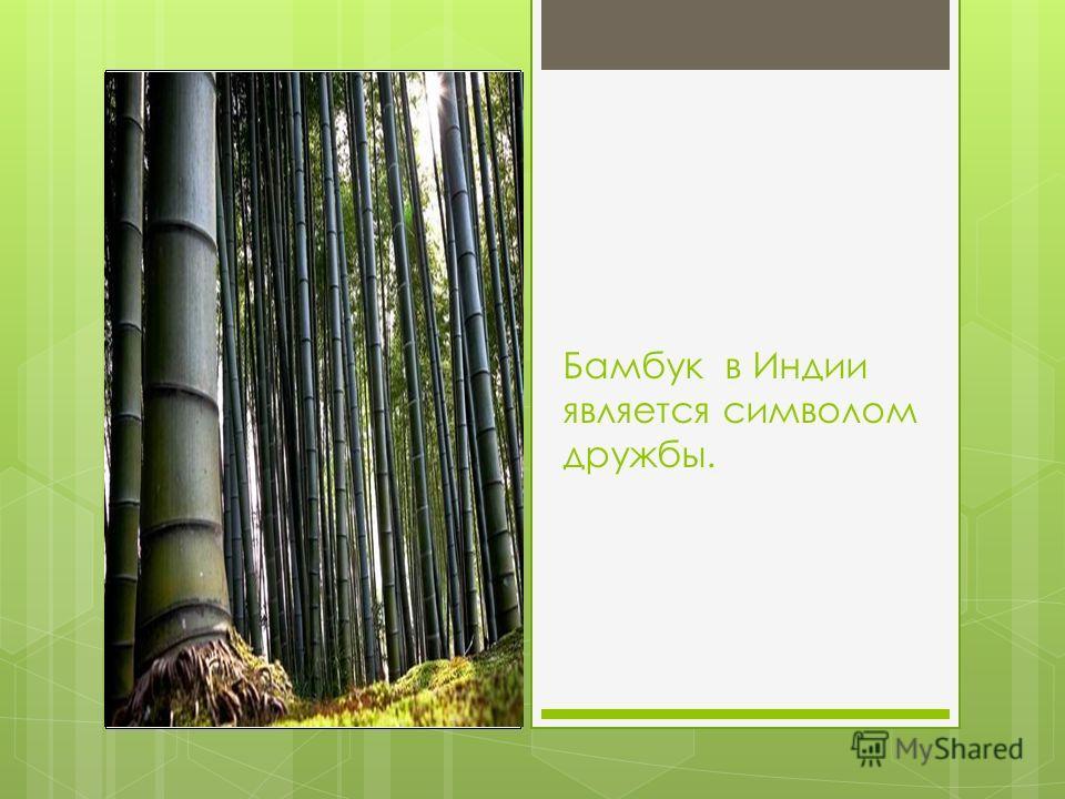 Здесь есть пальмы, фикусы, хлопковое дерево, дерево-гигант батангор и уникальное дерево баньян.