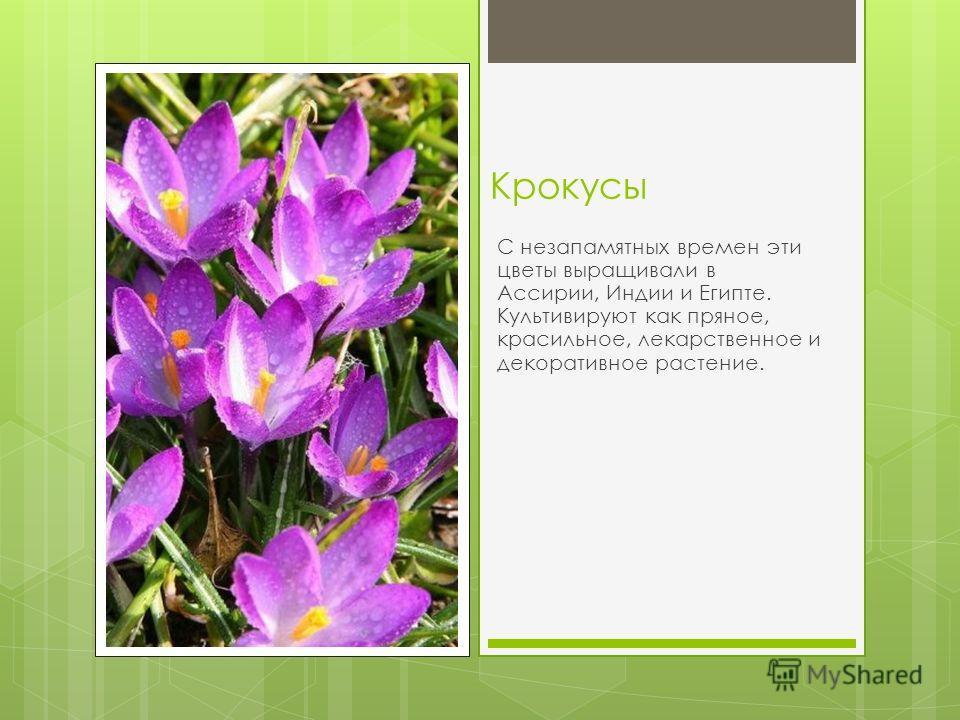 Катарантус род однолетних или вечнозелёных многолетних травянистых растений, а также полукустарников семейства Кутровые. Род включает восемь видов, семь из которых распространены на Мадагаскаре, а один в Индии и Шри Ланке.