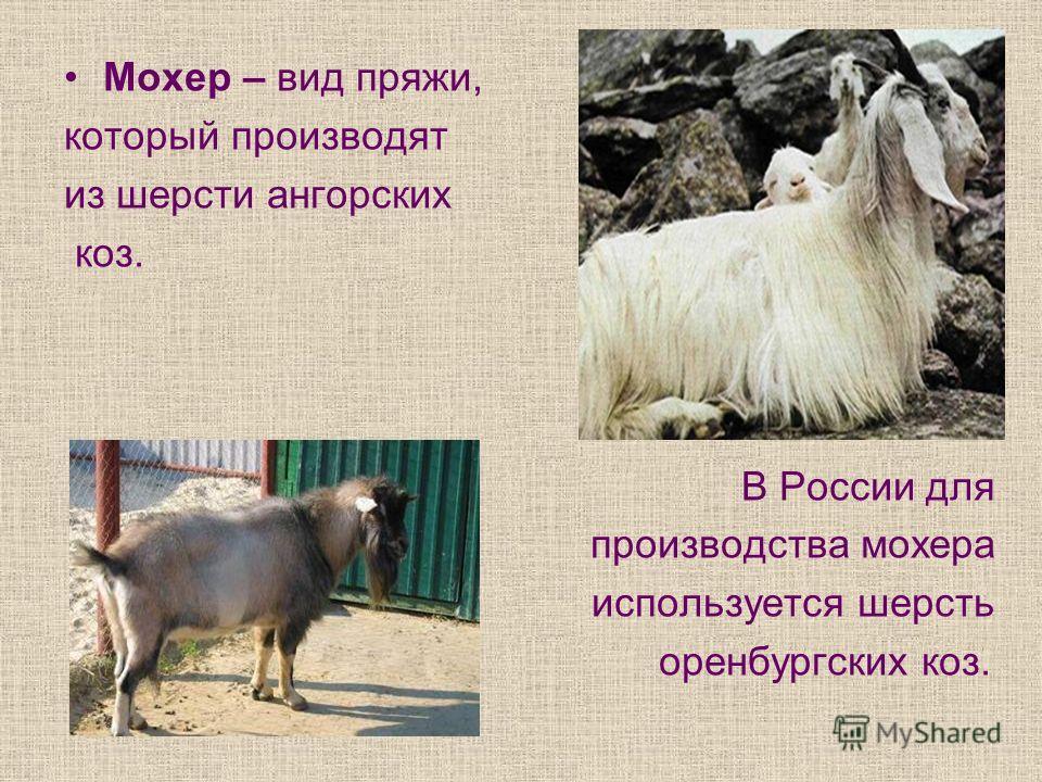 Мохер – вид пряжи, который производят из шерсти ангорских коз. В России для производства мохера используется шерсть оренбургских коз.