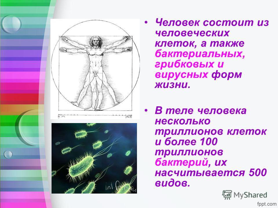 Человек состоит из человеческих клеток, а также бактериальных, грибковых и вирусных форм жизни. В теле человека несколько триллионов клеток и более 100 триллионов бактерий, их насчитывается 500 видов.