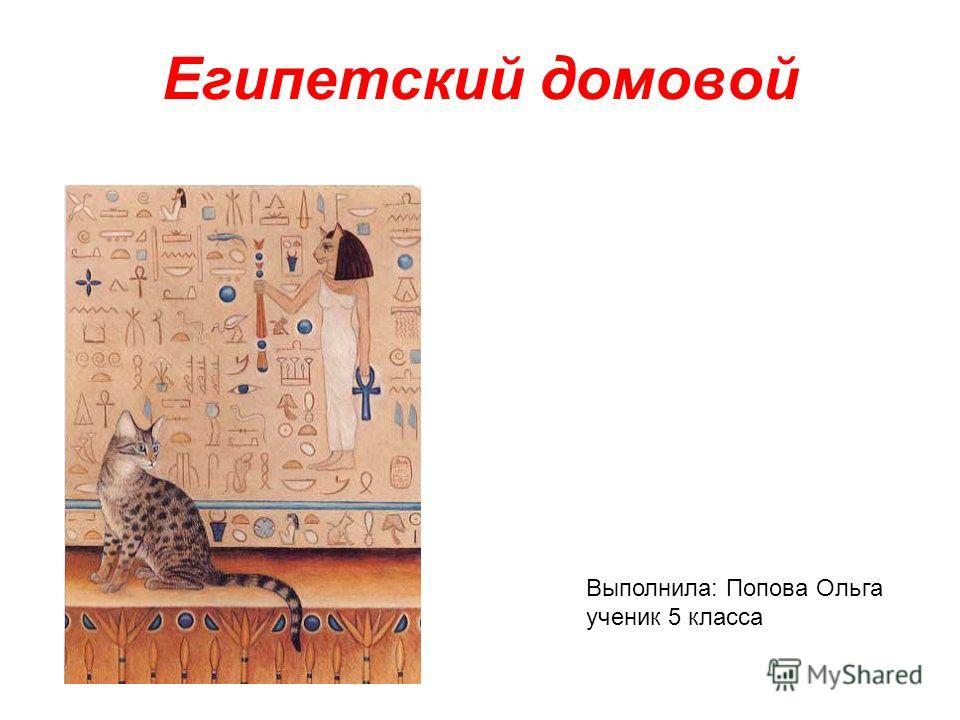 Египетский домовой Выполнила: Попова Ольга ученик 5 класса
