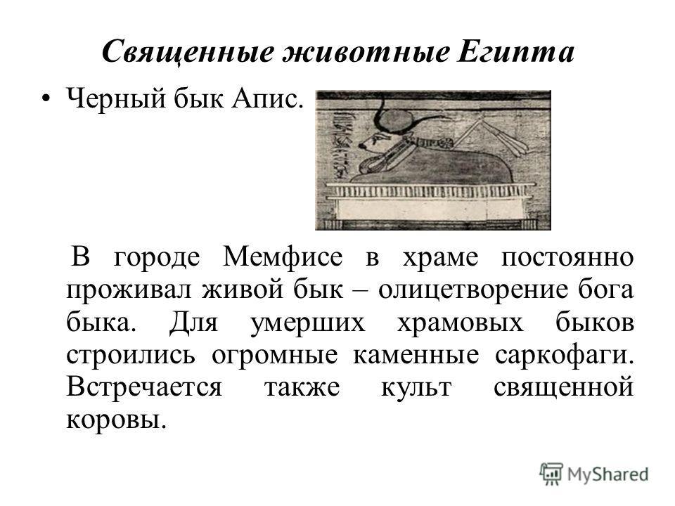 Священные животные Египта Черный бык Апис. В городе Мемфисе в храме постоянно проживал живой бык – олицетворение бога быка. Для умерших храмовых быков строились огромные каменные саркофаги. Встречается также культ священной коровы.