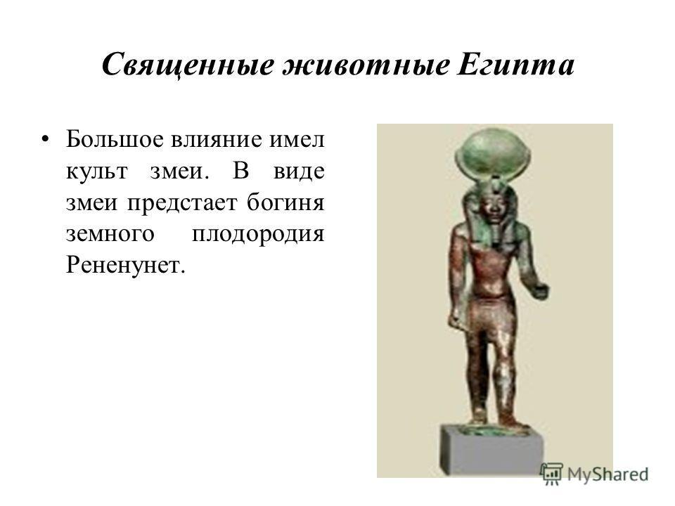Священные животные Египта Большое влияние имел культ змеи. В виде змеи предстает богиня земного плодородия Рененунет.
