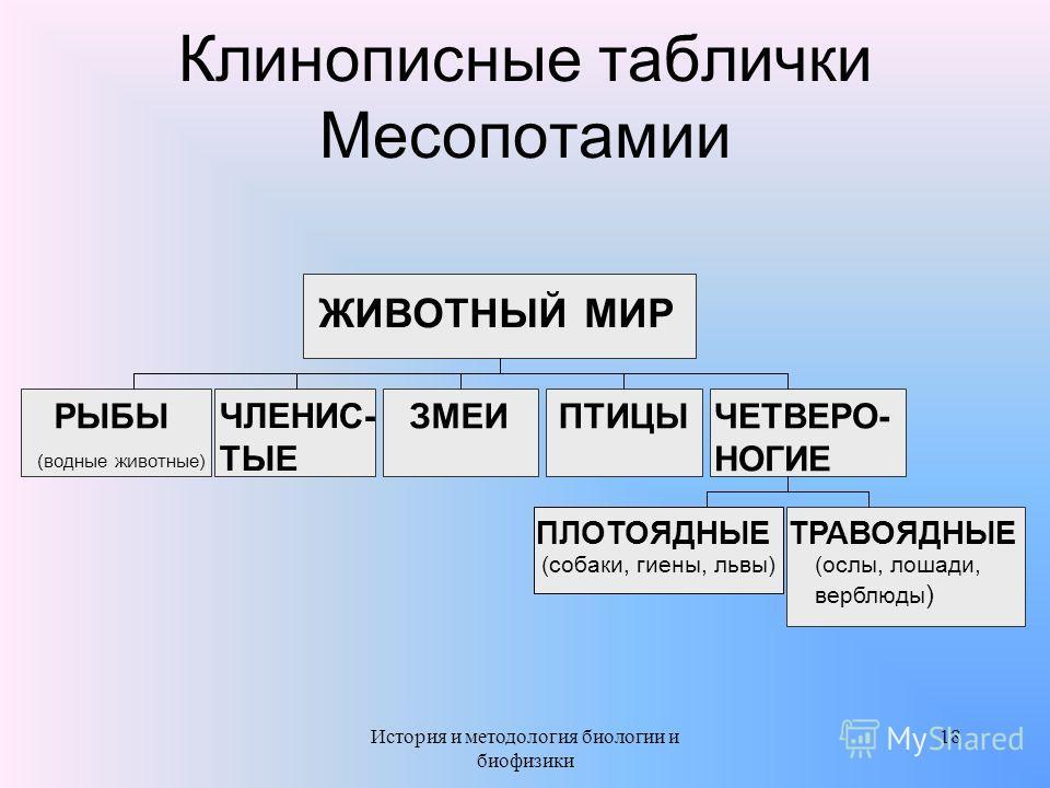 Клинописные таблички Месопотамии РЫБЫ (водные животные) ЧЛЕНИС- ТЫЕ ЗМЕИПТИЦЫ ПЛОТОЯДНЫЕ (собаки, гиены, львы) ТРАВОЯДНЫЕ (ослы, лошади, верблюды ) ЧЕТВЕРО- НОГИЕ ЖИВОТНЫЙ МИР 18История и методология биологии и биофизики