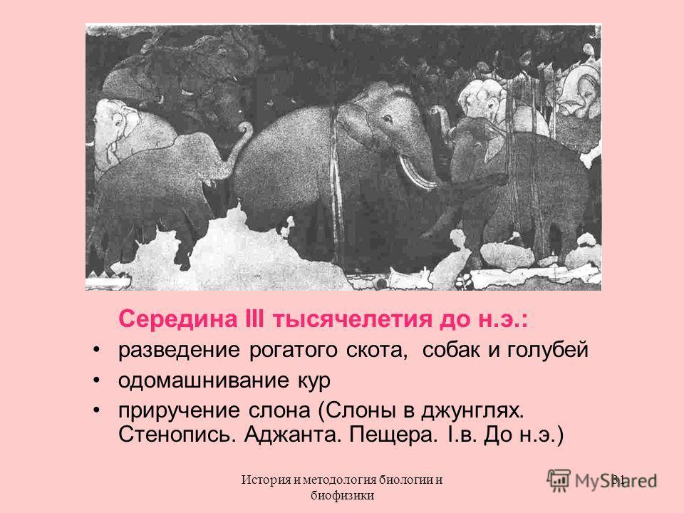 Середина III тысячелетия до н.э.: разведение рогатого скота, собак и голубей одомашнивание кур приручение слона (Слоны в джунглях. Стенопись. Аджанта. Пещера. I.в. До н.э.) 31История и методология биологии и биофизики