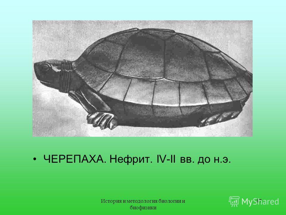 ЧЕРЕПАХА. Нефрит. IV-II вв. до н.э. 37История и методология биологии и биофизики