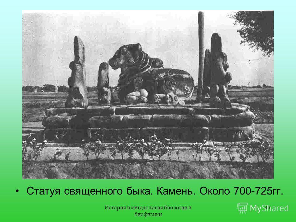 Статуя священного быка. Камень. Около 700-725гг. 41История и методология биологии и биофизики