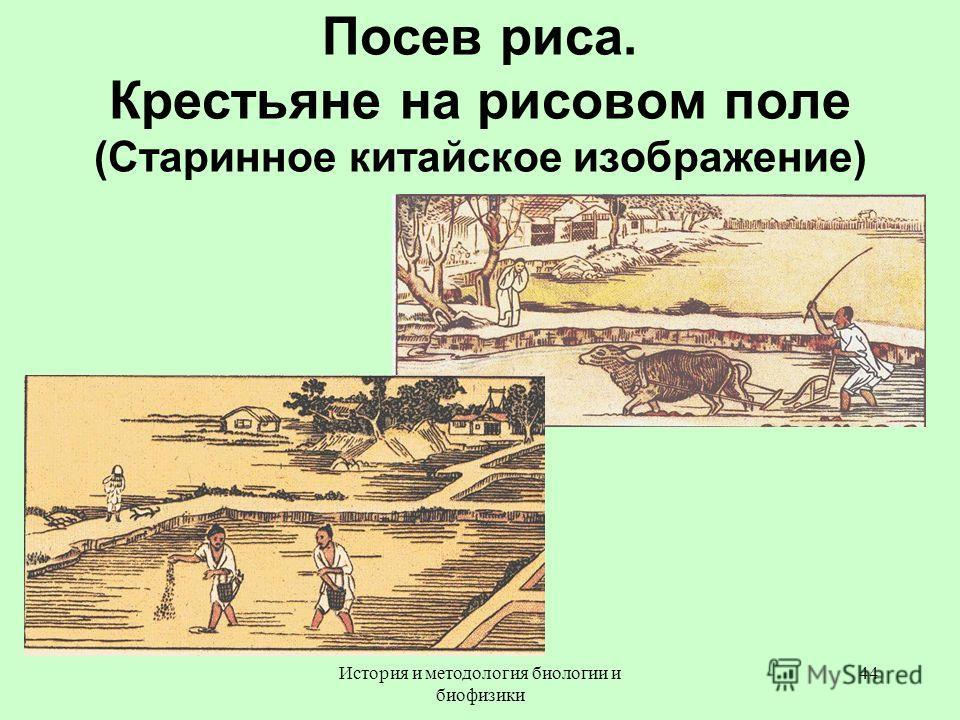 Посев риса. Крестьяне на рисовом поле (Старинное китайское изображение) 44История и методология биологии и биофизики