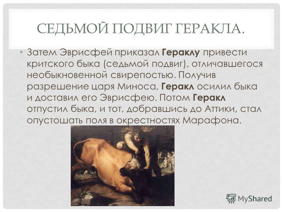 СЕДЬМОЙ ПОДВИГ ГЕРАКЛА. Затем Эврисфей приказал Гераклу привести критского быка (седьмой подвиг), отличавшегося необыкновенной свирепостью. Получив разрешение царя Миноса, Геракл осилил быка и доставил его Эврисфею. Потом Геракл отпустил быка, и тот,