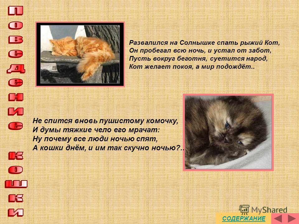 Кошка нуждается в тесном контакте с хозяином С посторонними людьми или кошками животное ведет себя по-разному Кошки Обладают отрицательными чертами Положительной особенностью кошек является их верность тому месту, которое стало их жилищем Кошка индив