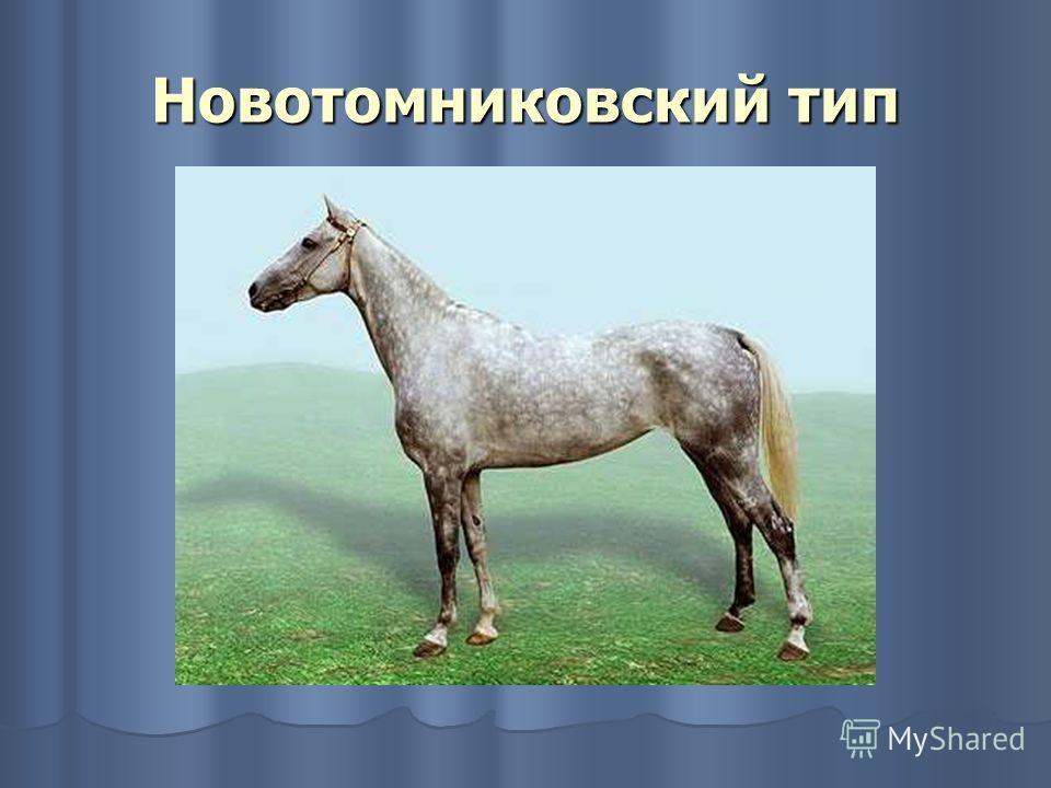 Новотомниковский тип