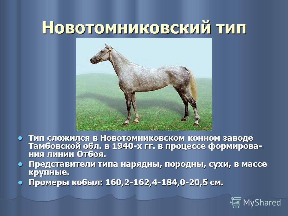Тип сложился в Новотомниковском конном заводе Тамбовской обл. в 1940-х гг. в процессе формирова- ния линии Отбоя. Тип сложился в Новотомниковском конном заводе Тамбовской обл. в 1940-х гг. в процессе формирова- ния линии Отбоя. Представители типа нар