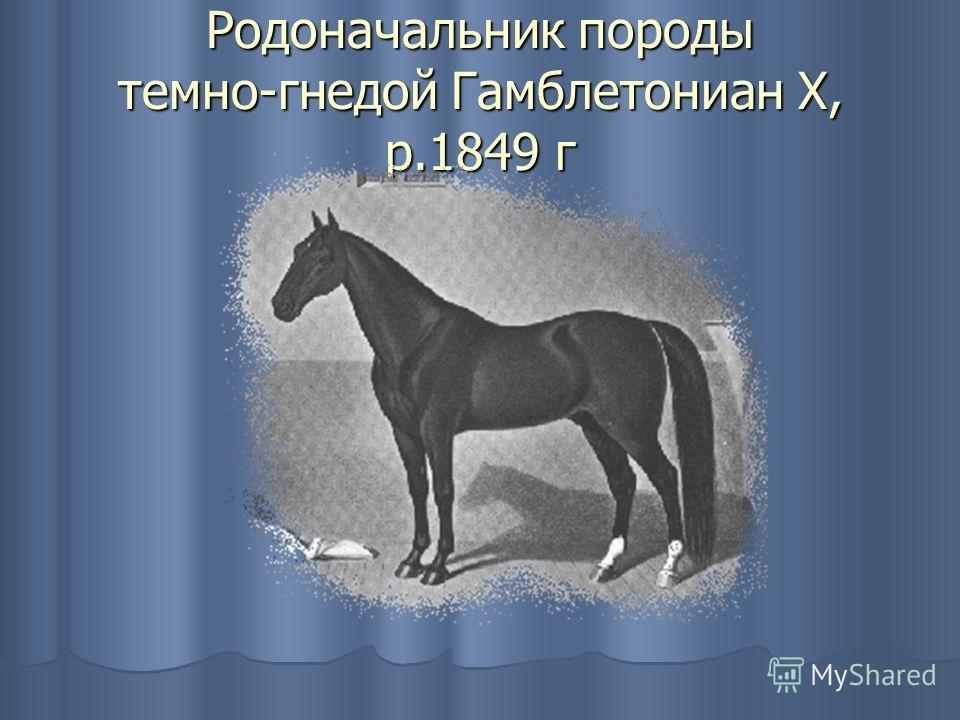 Родоначальник породы темно-гнедой Гамблетониан X, р.1849 г