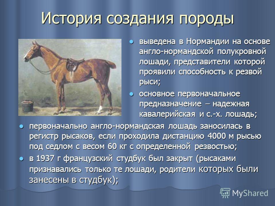 История создания породы выведена в Нормандии на основе англо-нормандской полукровной лошади, представители которой проявили способность к резвой рыси; выведена в Нормандии на основе англо-нормандской полукровной лошади, представители которой проявили