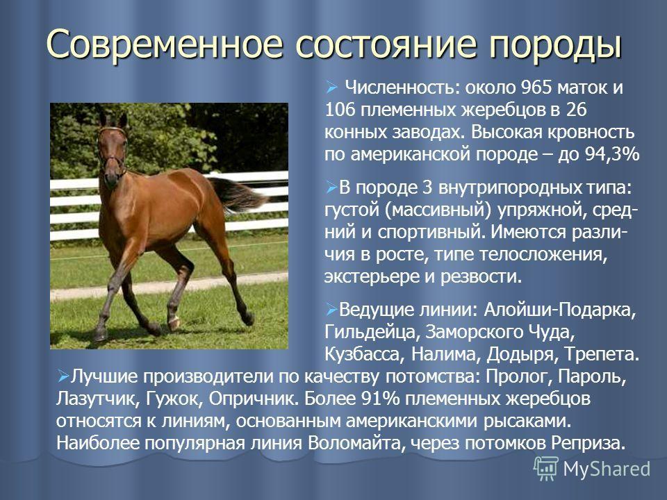 Современное состояние породы Численность: около 965 маток и 106 племенных жеребцов в 26 конных заводах. Высокая кровность по американской породе – до 94,3% В породе 3 внутрипородных типа: густой (массивный) упряжной, сред- ний и спортивный. Имеются р