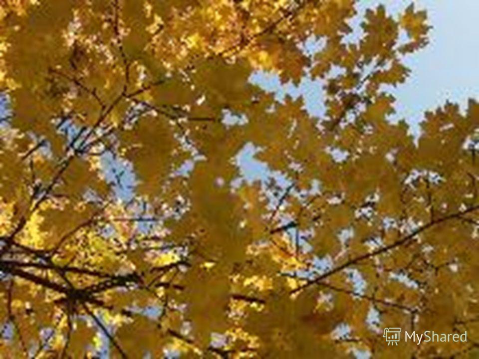 Шуршат осенние кусты. Шуршат на дереве листы. И дождь шуршит, И мышь, шурша, В нору спешит.